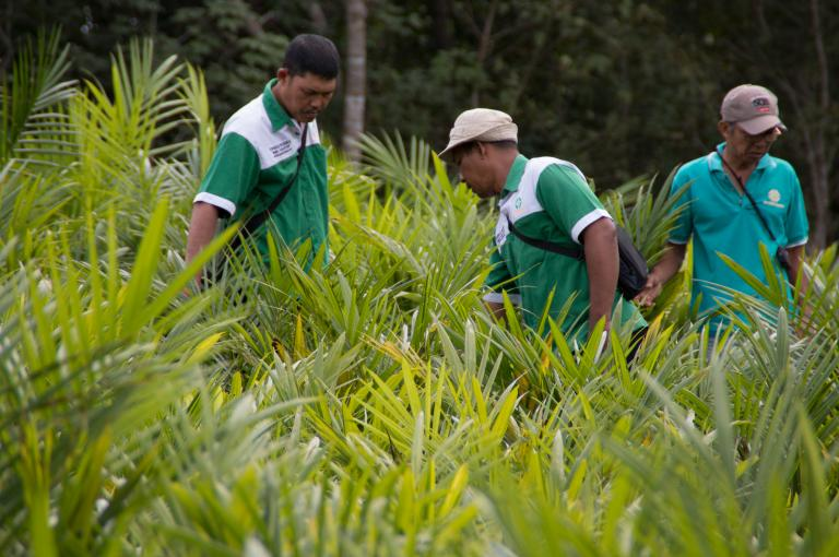 Sustainable Palm Oil and Soy